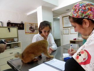 La doctora anota los datos del shiba inu Toddy